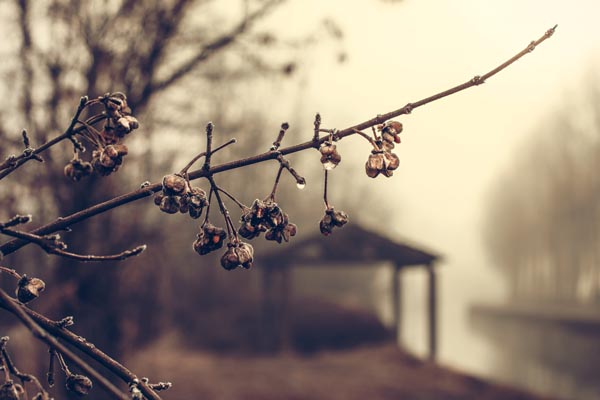 Rain, Fog, Tree, Bud, Branch & Forest - Public Domain Images