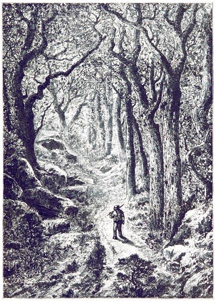 Sentier de la Forêt de Fontainebleau — Dessin d'Après Desjobert