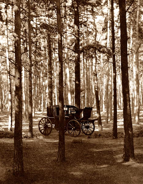 Carriage; Fir Woods, Copsham [Adaptation]